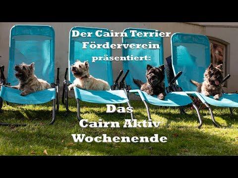Cairn Terrier Aktiv Wochenende in Ritterhude