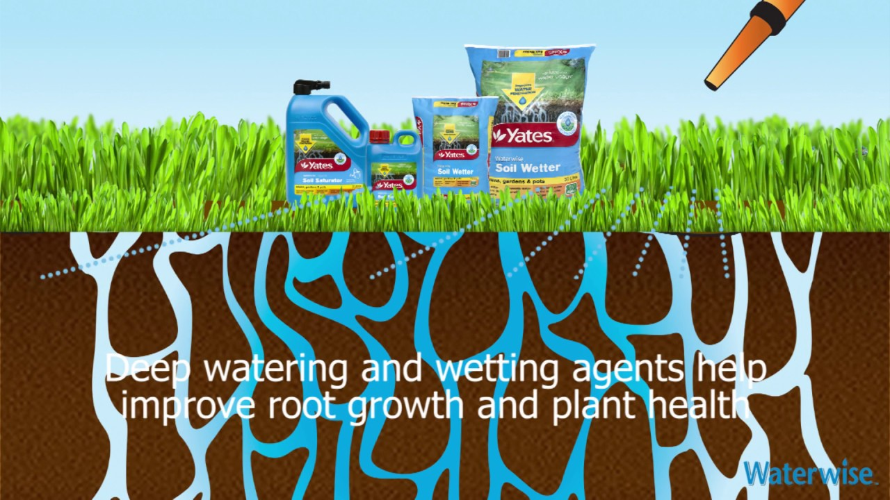 Summer gardening how to help your soil absorb more water youtube - Plants that dont need soil natures wonders ...