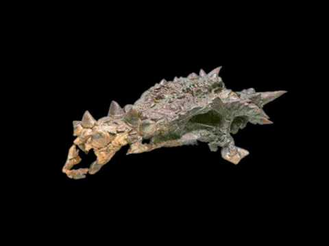 Dragons skull (Dracorex)