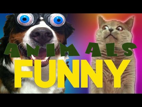 Funny Animals Vine Compilation