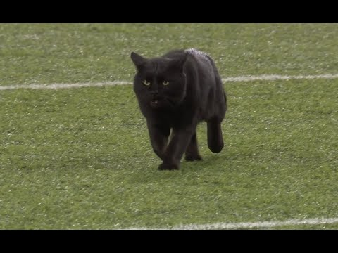 Aly - A Little Late For Halloween, But Black Cat Appears On Monday Night Football