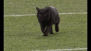 cat-hilariously-runs-onto-field-during-game-giants-vs-cowboys-2019