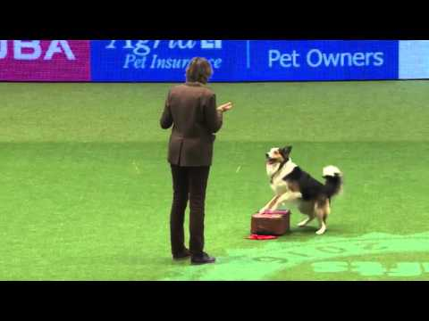 Crufts 2016 International Freestyle winner - England