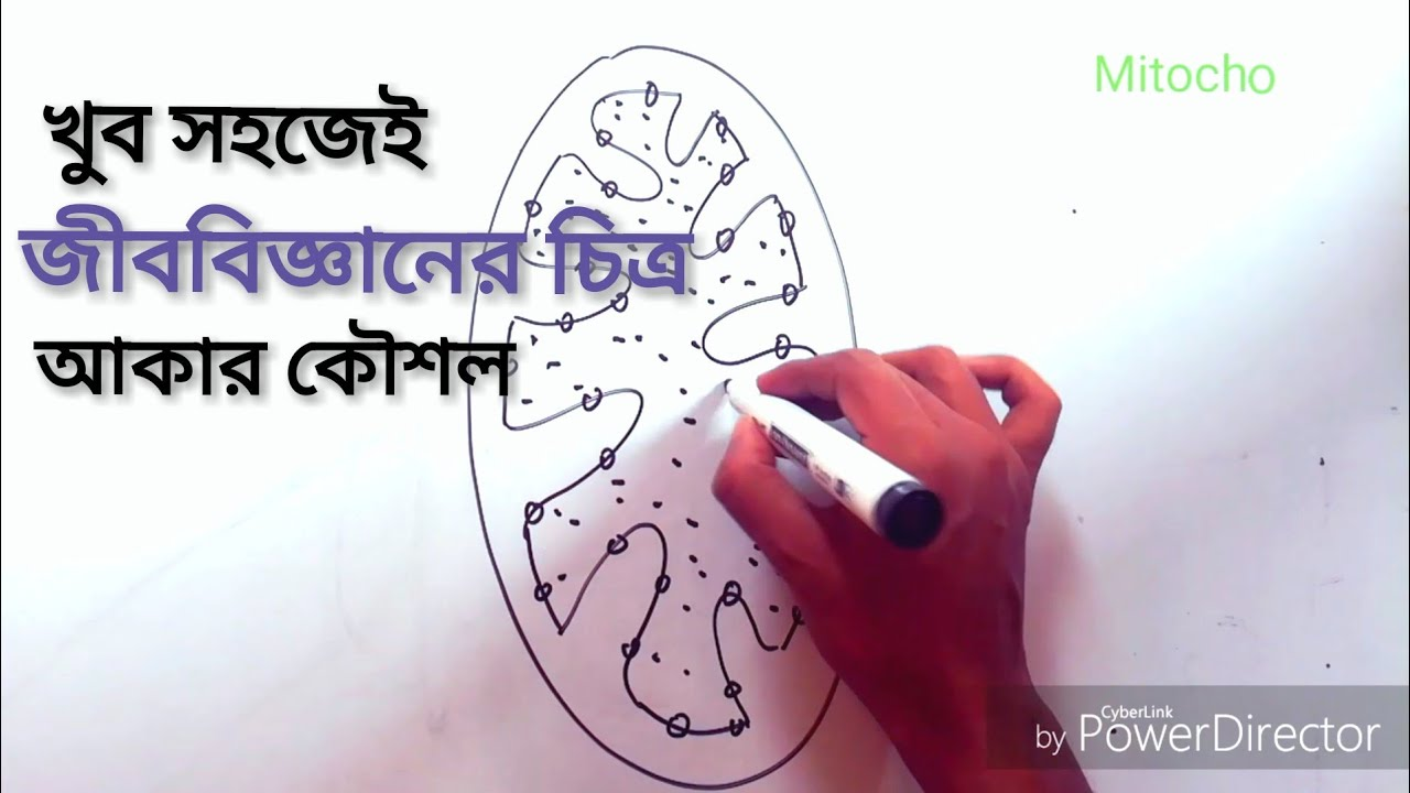 How To Draw Biology Diagram Early | SSC Biology Class 9 ...