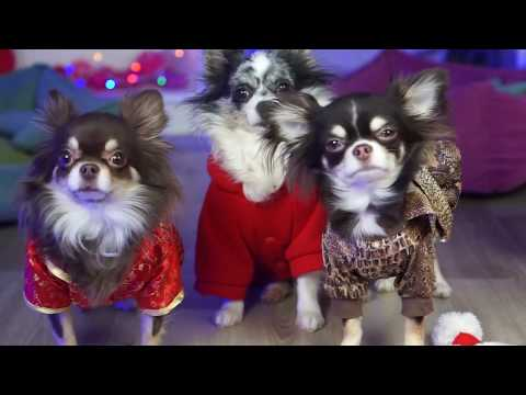 видео: ПОКАЗ МОД ВОЛШЕБНЫХ ПИТОМЦЕВ! ГАРДЕРОБ и ОДЕЖДА magic pets