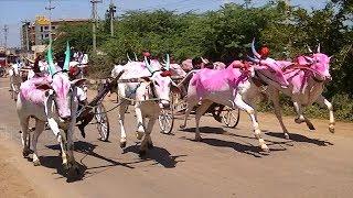 Kudubandi bullock cart race at Yadawad