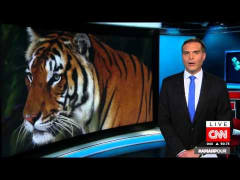For First Time In 100 Years Tiger Population Growing