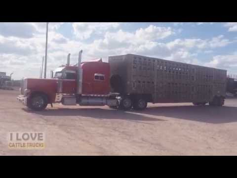 Livestock Auction in Abilene, Texas