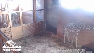 Animal Adventure Park Live Stream