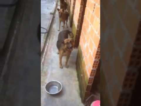 Trại chó thuần chủng bình định – gia lai- phú yên- Đà Nẵng