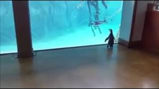 penguin videos