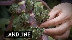 Kalette: The Australian farmer who introduced a brand new vegetable