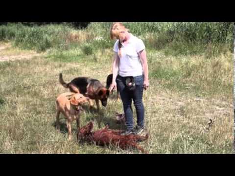 dresseur éducateur canin cerfpa formation - YouTube