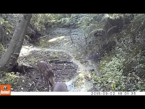 Playful Fawn Frolicking In A Creek
