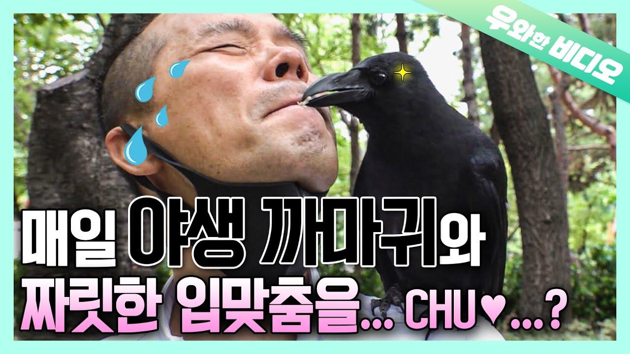 야생 까마귀에게 입으로 먹이 줘보신 분?! (여기 있어요...ㄷㄷ)┃Feeding a Wild Crow With One's Mouth (...but why..?)
