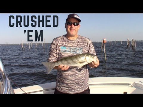 Live Lining For ROCKFISH On The Chesapeake Bay