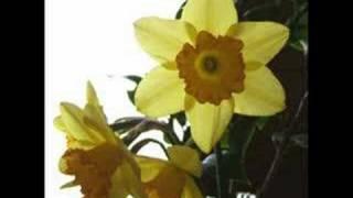 七つの水仙   Seven Daffodils   Brothers Four