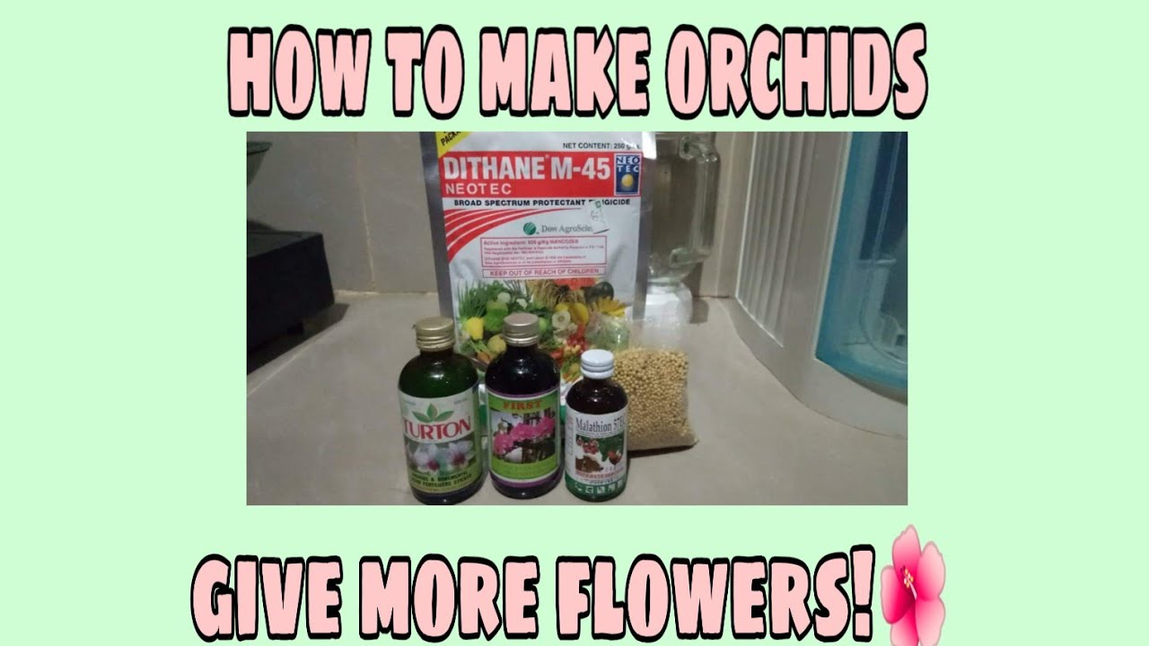 How to make orchids give more flowers and healthier