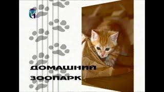 Домашний зоопарк. Персидские кошки. Калейдоскоп