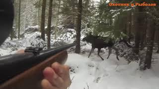 Хороший момент охоты на лося