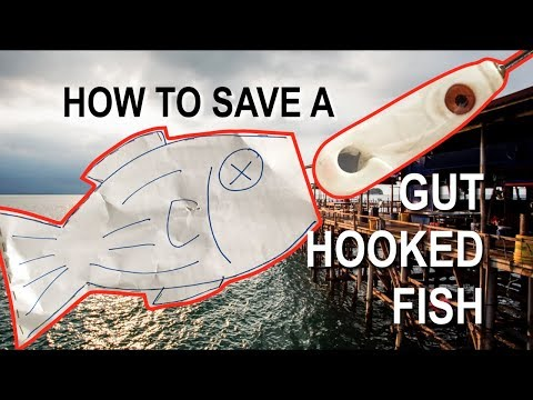 How To Remove Hook From Gut Hooked Fish (Bedok Jetty Edition)