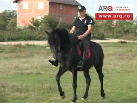 Brego - cel mai inteligent cal din Arad