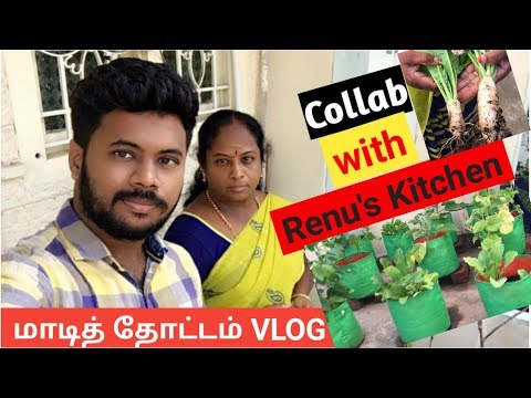 Organic Terrace Garden || Collab with Renu's Kitchen || Chennai Vlogger - Tamil