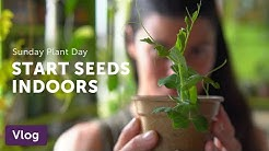 Start Seeds Indoors While Sheltering In — Vlog 033