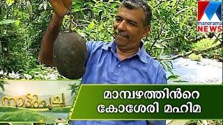 Kosseri Mango A real BIG taste Nattupacha Manorama News