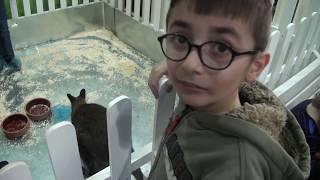 Контактный Зоопарк Зооландия / Видео