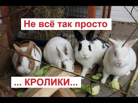 Кролики разведение и содержание в домашних условиях клетки декоративные