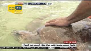 فيديو.. علاج سلحفاة تعرضت للعنف في لبنان