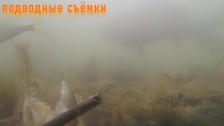 Подводные съёмки Реакция рыбы на ракушку перловицу