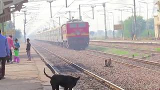 Dog Hit By Train | Indian Railways Accident | Dog Accident