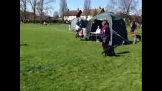 Heelwork - Slow & Fast Pace (class B) - Stafford X Poodle - Caroline & Strudel