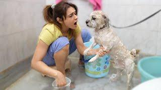 Teddy Bna Bali Ka Bakra  || DOG BATH DAY