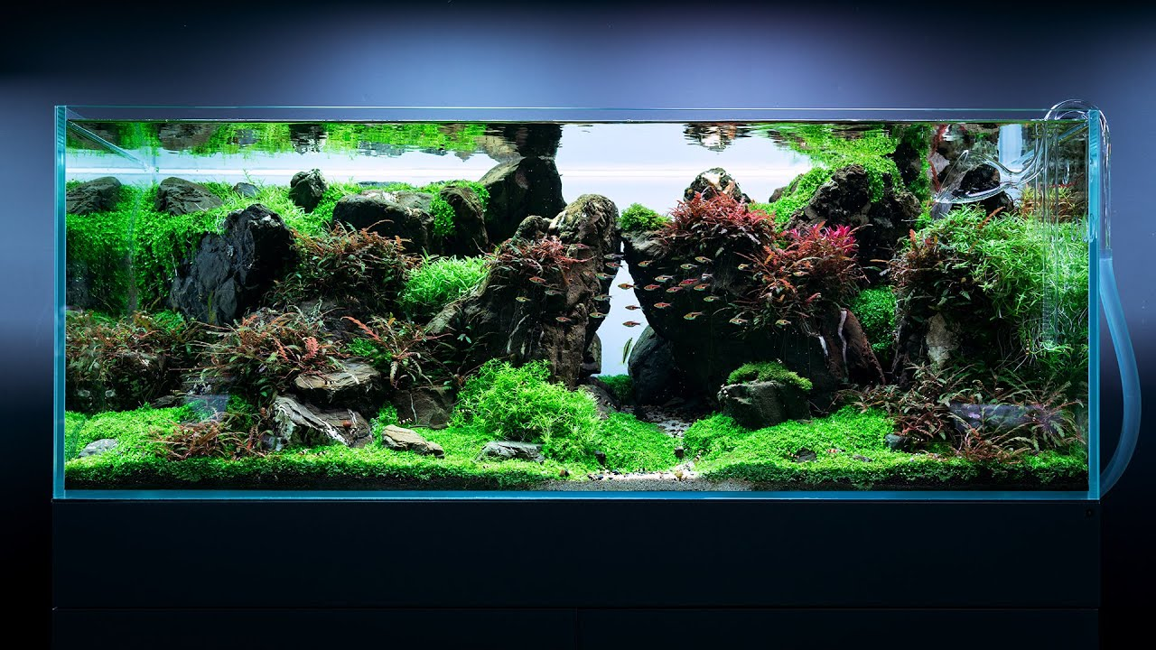 240l Epic Japanese Aquascape At Green Aqua 4k Cinematic Youtube