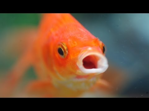Zero Maintenance Fish Barrel!
