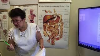« Гемангиомы, диффузные изменения печени и поджелудочной железы, панические атаки».