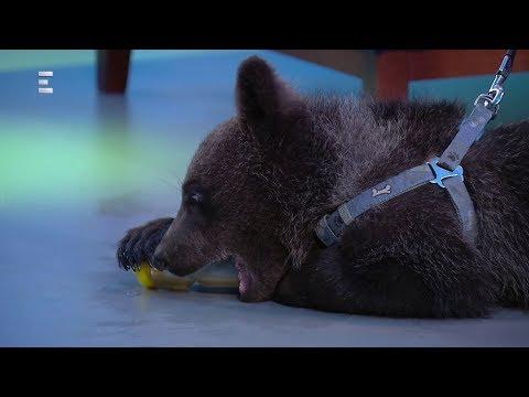 Lilu a maci kalandjai - hazánkban is feltűntek a medvék - Zöld világ (2018-06-08) - ECHO TV letöltés