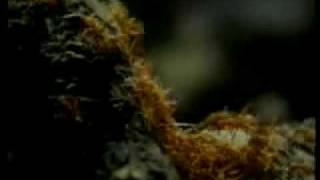 Das Wunder der Ameise - Dokumentation - 2/4