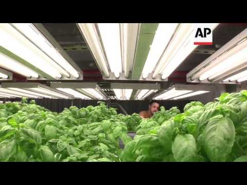 Vertical farming big trend in Chicago