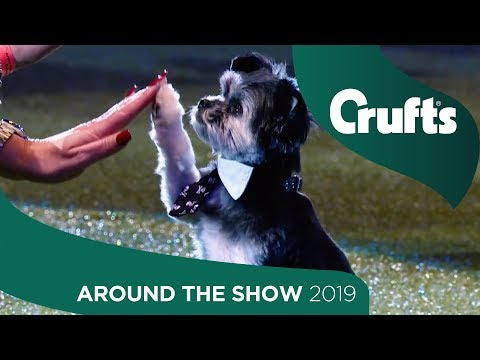 Teddy Steals the Show - Today at Crufts Day 3 | Crufts 2019