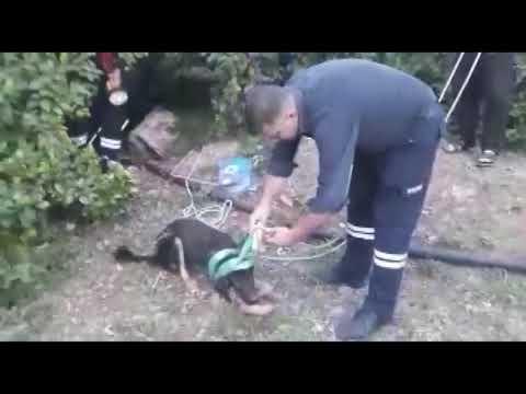 Köpek Yavruları Geceyarısı Operasyonuyla Kurtarıldı