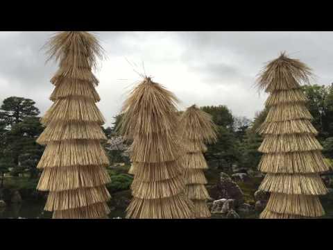 Nijo Castle Nijo jo Kyoto