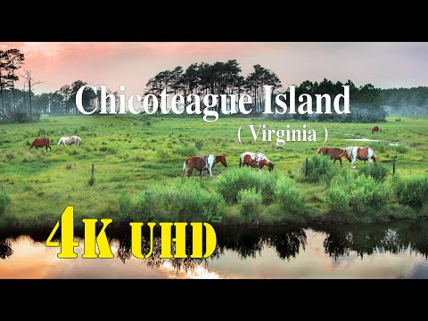 Chincoteague Island  ( Virginia )