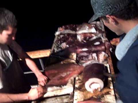 Dana wharf sportfishing giant squid fishing part 7 youtube for Dana point fish count
