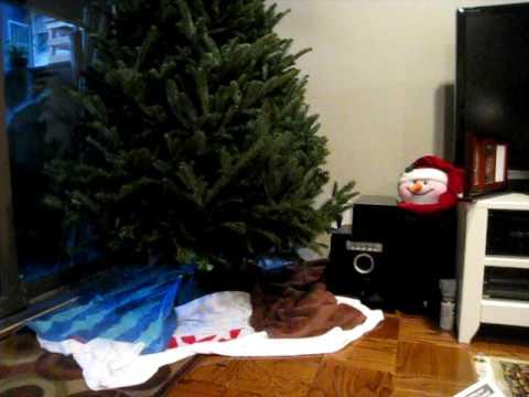 Part 1 of how to keep cats away from xmas trees - YouTube