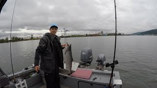 Spring Chinook on Pro-Troll & Spinner on Willamette River - June 1, 2017