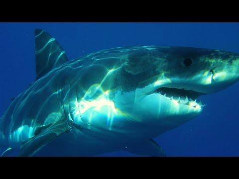 Deep Blue Sea Music Video Clip Mix 2016